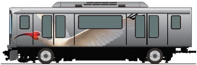 White Ibis on APM