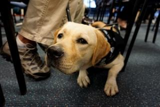 Southeastern Guide Dogs at TPA